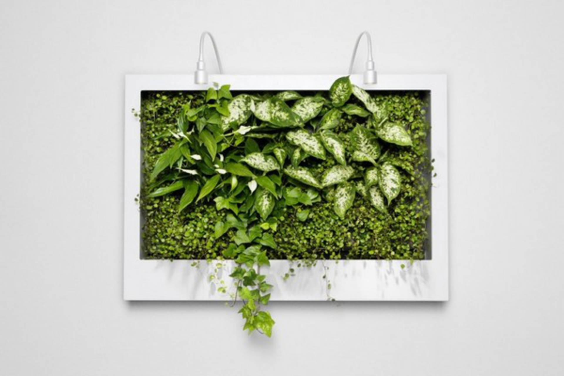 Make Your House Green And Flourish With Greenwalls Home